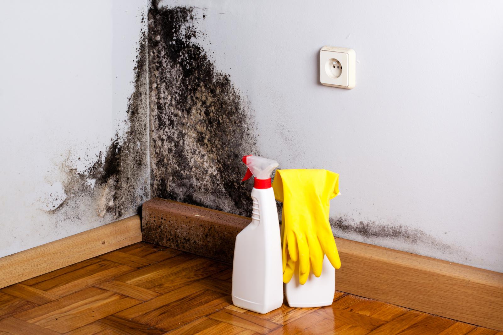 벽 곰팡이